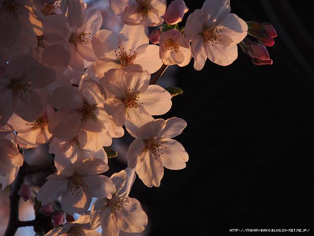 150415_y_04.jpg